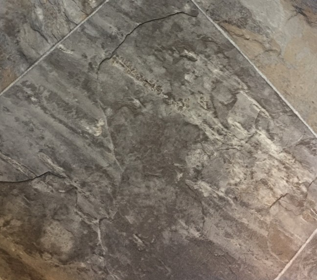 Flooring Samples Castle Rock